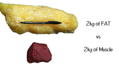 fat-vs-muscles